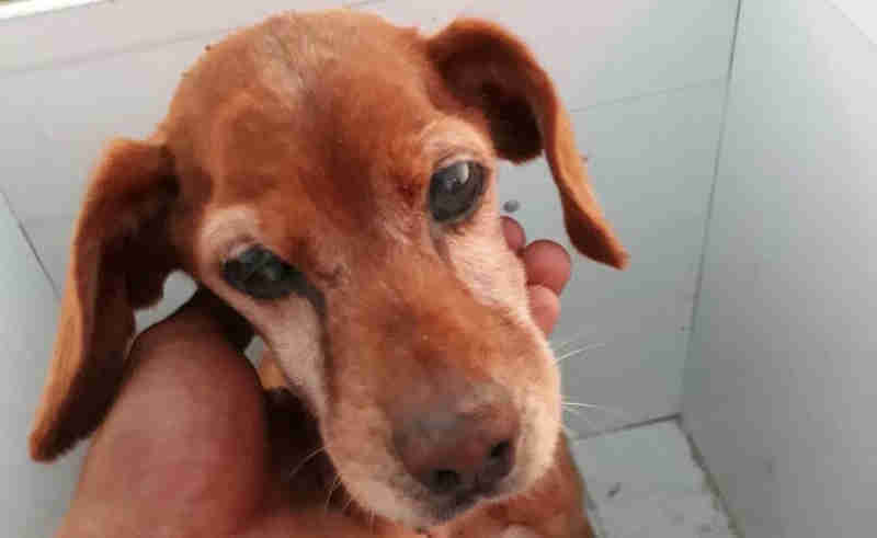 Cadela é resgatada após cair em buraco e ser soterrada em Garça, SP