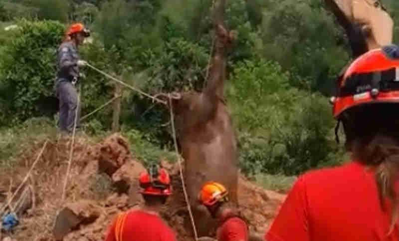 Bombeiros resgatam vaca de buraco com três metros de profundidade
