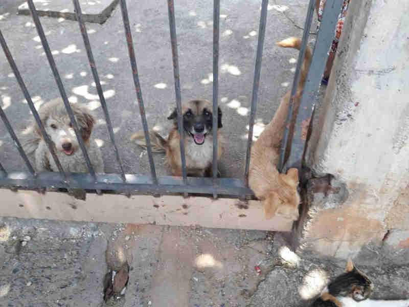 'Cães recolhidos vivem em campos de concentração', diz protetora de Jundiaí, SP