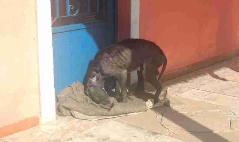 Cão faz 'vigília' em casa à espera de tutor que morreu: 'Definhou de tristeza', diz vizinha