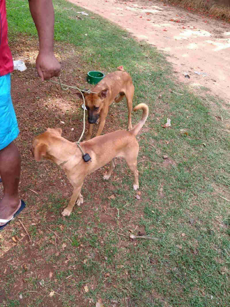 Presidente da UIPA cobra ações do Debea na recolha de cães, em Jundiaí, SP