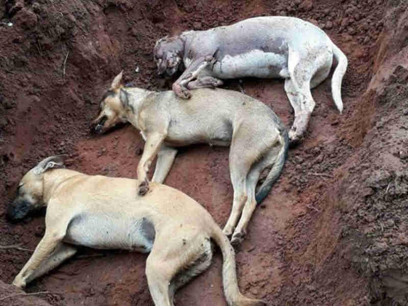 Polícia investiga matança de animais em Nova Aliança, SP