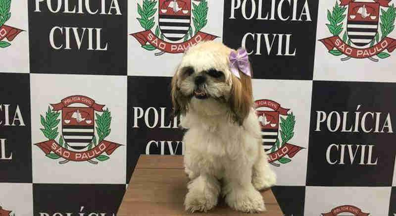 Solucionado o caso da cadelinha Amora, sequestrada por três meses