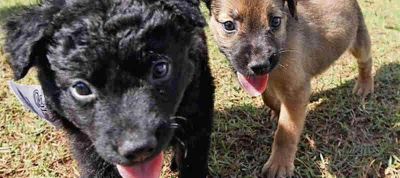 Adoção de animais é maior em Santo André, SP