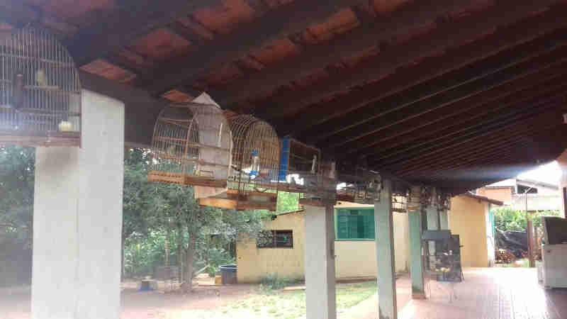 Homem é multado em R$ 39,5 mil em São Carlos, SP, por manter aves em cativeiro