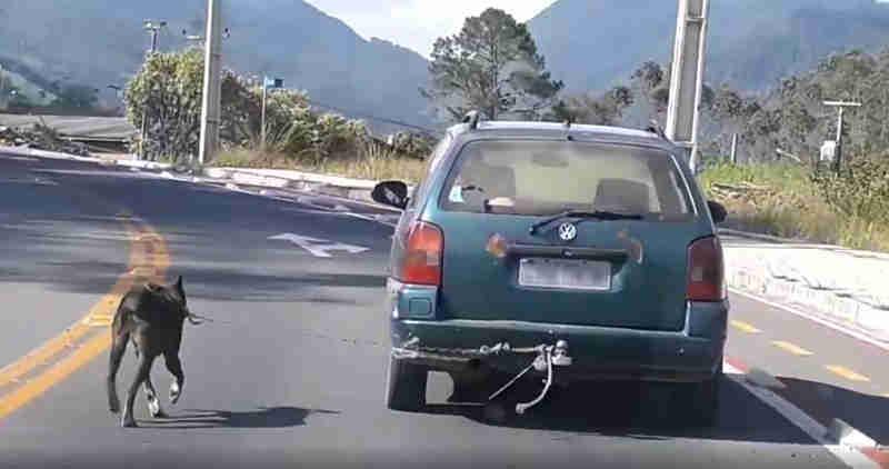 Homem flagrado com cachorro amarrado fora de carro se apresenta à polícia em Timbó, SC