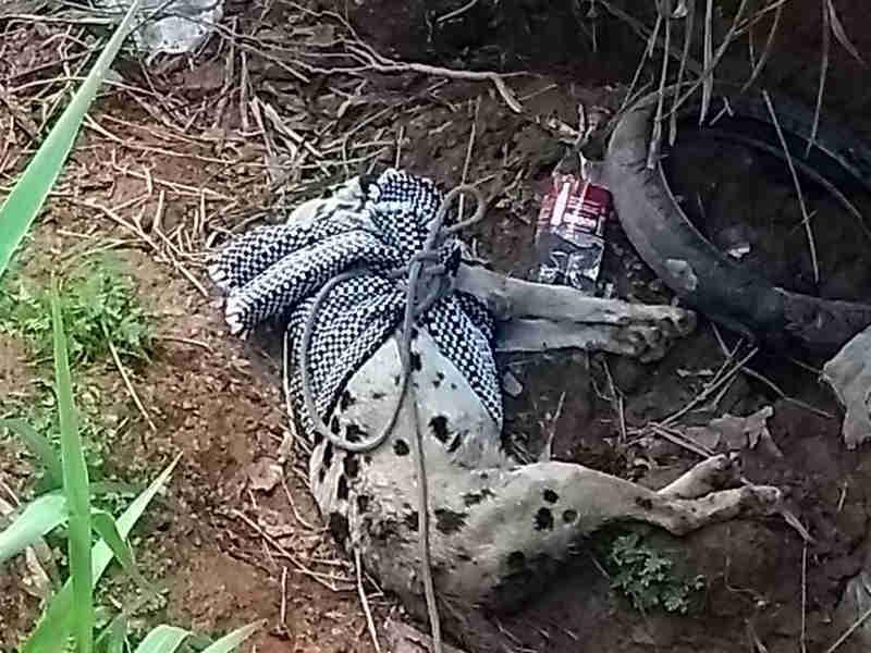 Bombeiros resgatam cão abandonado amarrado com cordas em matagal