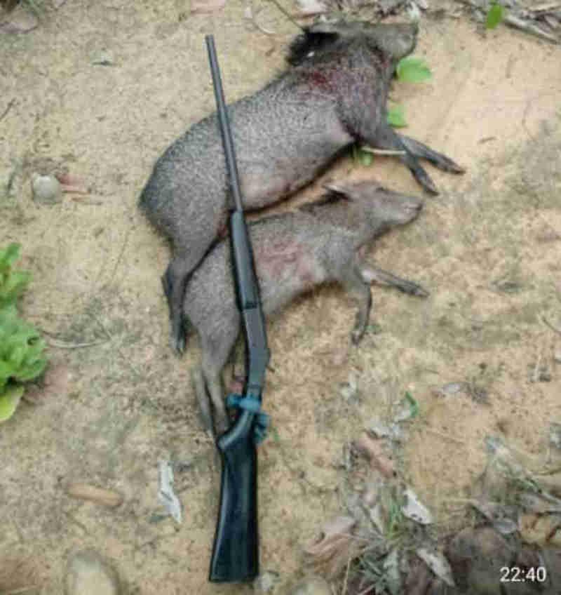 PF faz operação para prender caçadores que exibiam animais como troféus na internet