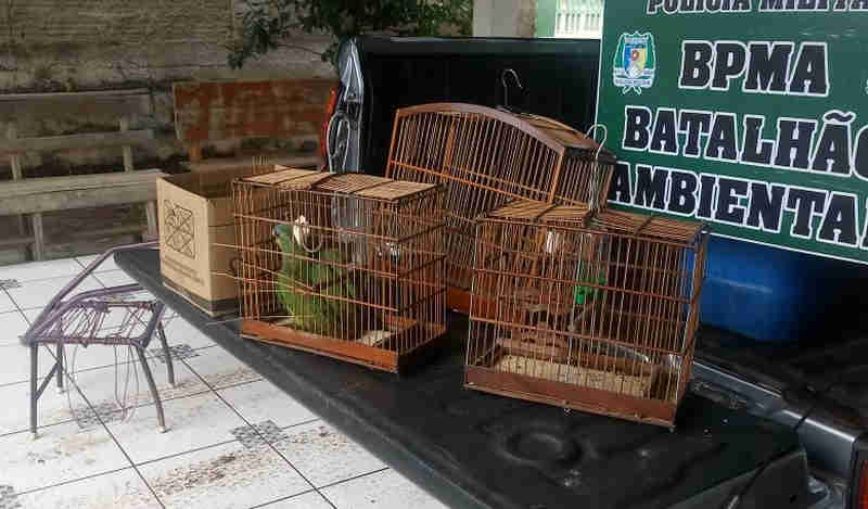 Pássaros silvestres são resgatados e criador multado pela PM Ambiental, no Tocantins