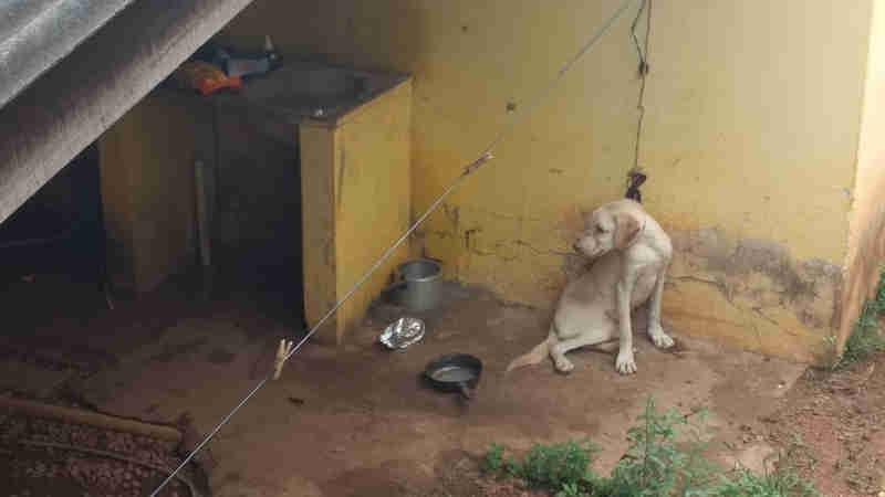 Cachorro vítima de maus-tratos é resgatado após ficar amarrado em janela