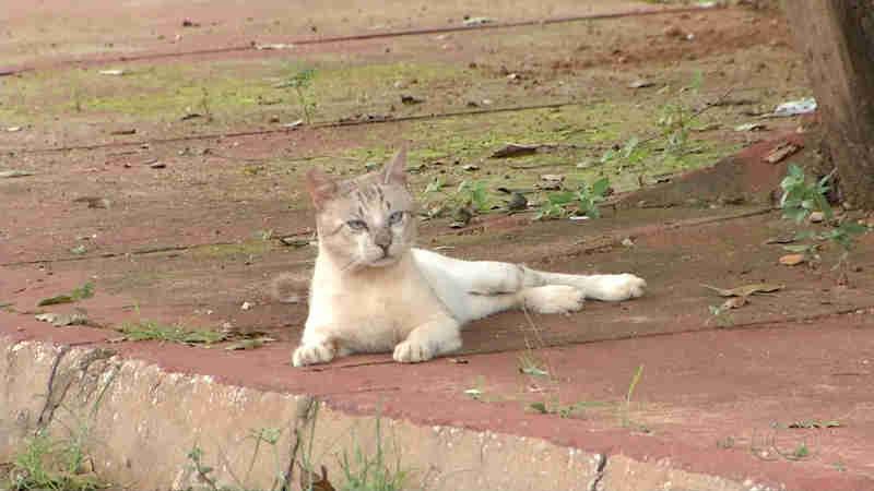 Moradores suspeitam que animais foram envenenados (Foto: Reprodução/TV Anhanguera)