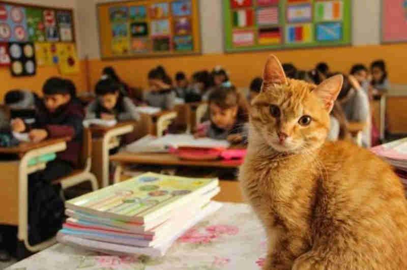 Gato de rua invade a sala de aula e transforma a vida dos alunos