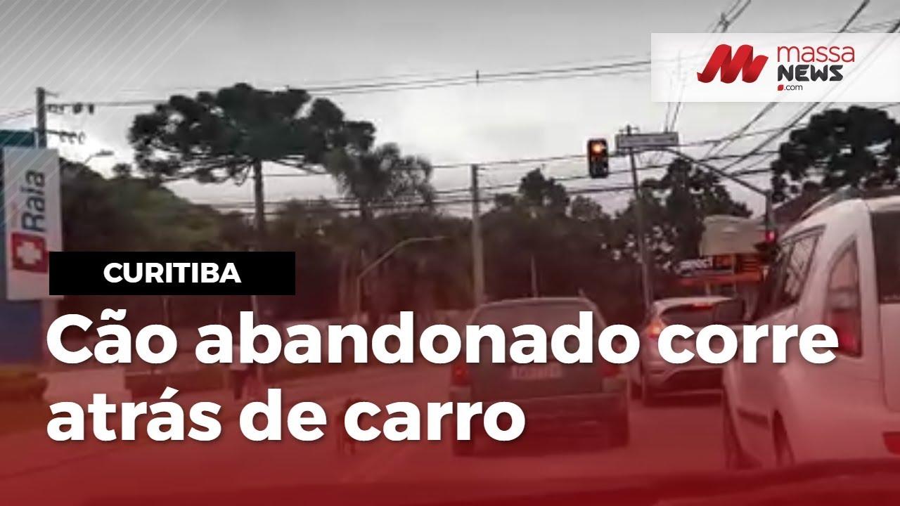Cachorro é abandonado e corre atrás do carro no São Braz, em Curitiba, PR; veja o vídeo