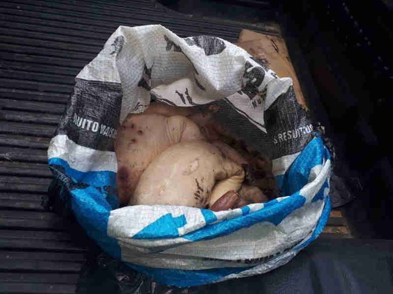 Homem foi flagrado com animais silvestres em Cruzeiro do Sul. (Foto: Divulgação)