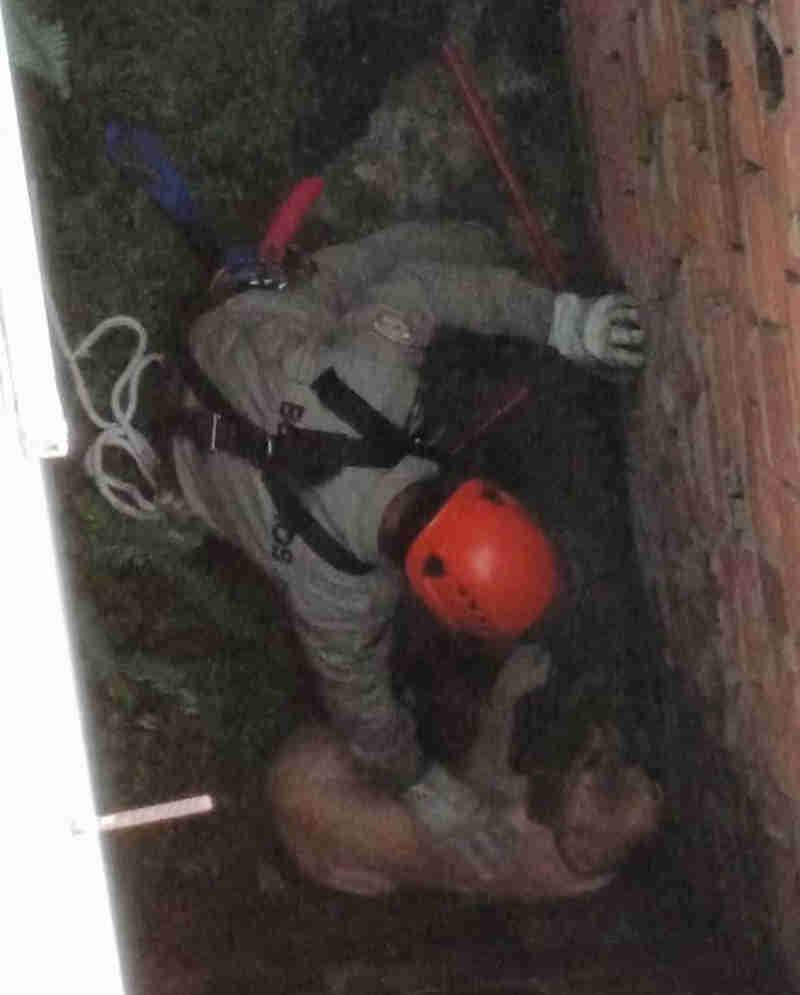 Cadela foi resgatada nesta sexta-feira (23) (Foto: Reprodução/Corpo de Bombeiros)
