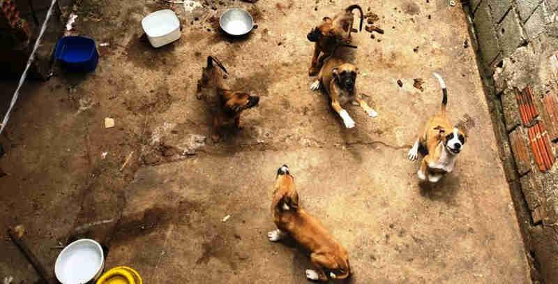 Vídeo: operação da OAB/AL resgata animais abandonados em residência
