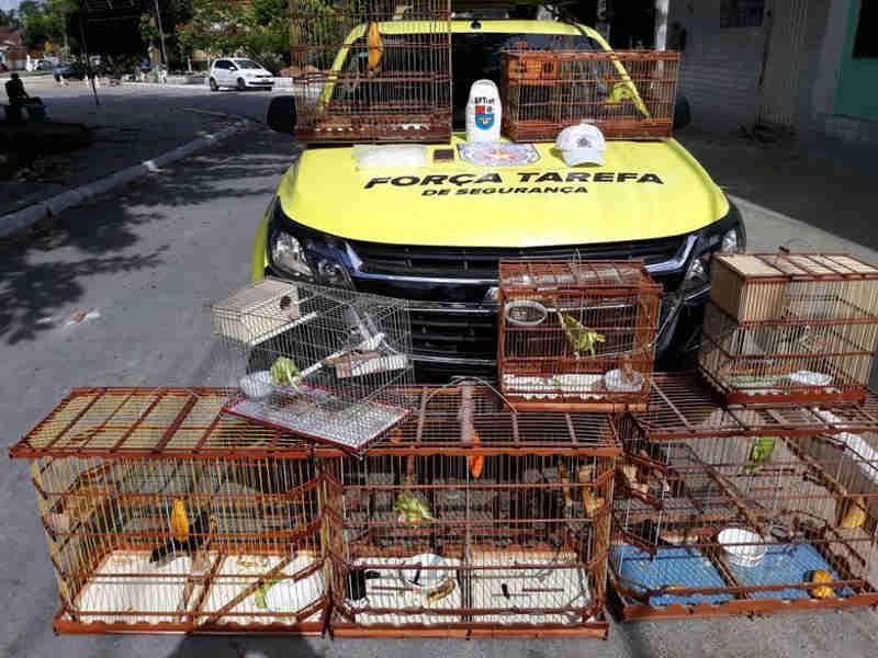 Homem é preso com 15 aves silvestres em casa após abordagem no Vergel, em Maceió, AL