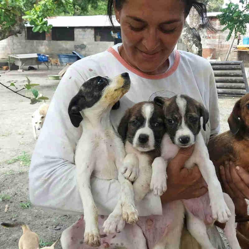 Centro de acolhimento de cães e gatos promove mutirão para arrecadação de donativos em Maceió, AL