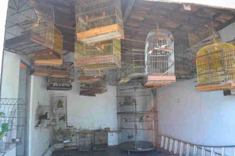 FPI: Base provisória da Fauna em Penedo (AL) já recebeu mais 600 animais silvestres