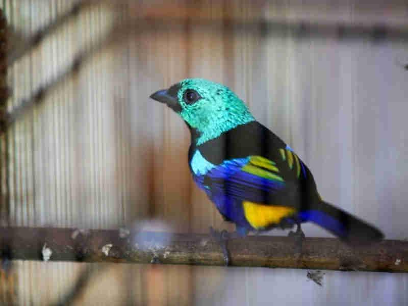 FPI recupera 100 animais silvestres que eram mantidos em cativeiro em Alagoas