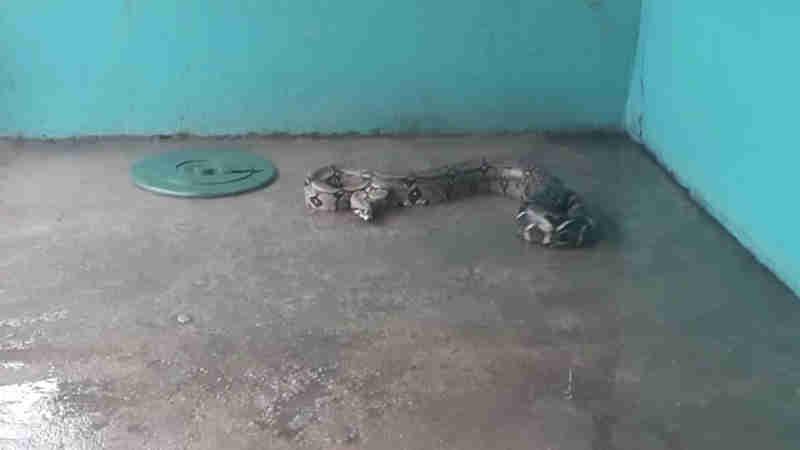 Moradores capturam cobra jiboia em rua de Manacapuru, no AM