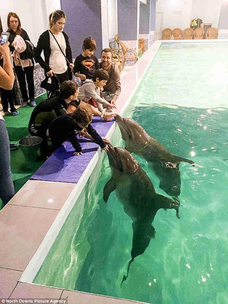 Golfinhos eram mantidos prisioneiros em piscina de hotel para 'sessões terapêuticas'