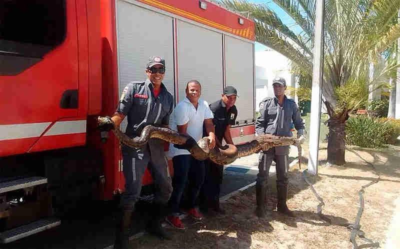 Sucuri de 4 metros é resgatada de incêndio em vegetação na BA