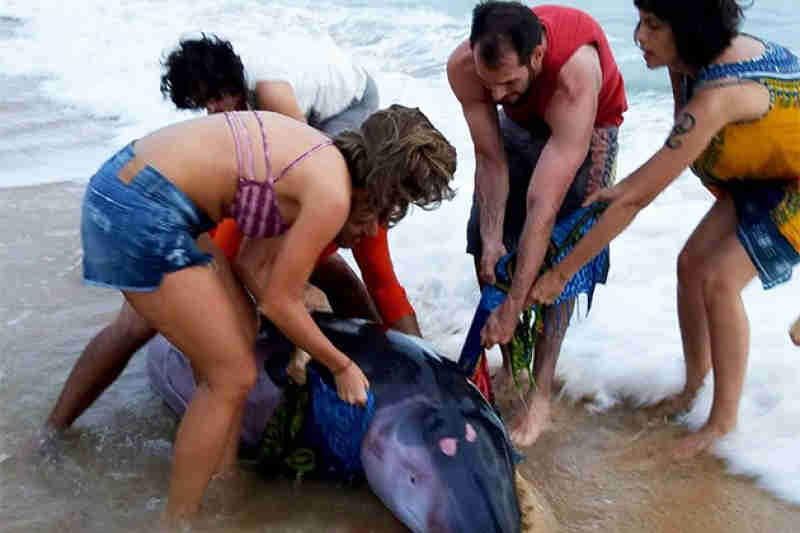 Baleia encalhada é salva por turistas em praia de Caraíva, em Porto Seguro, BA