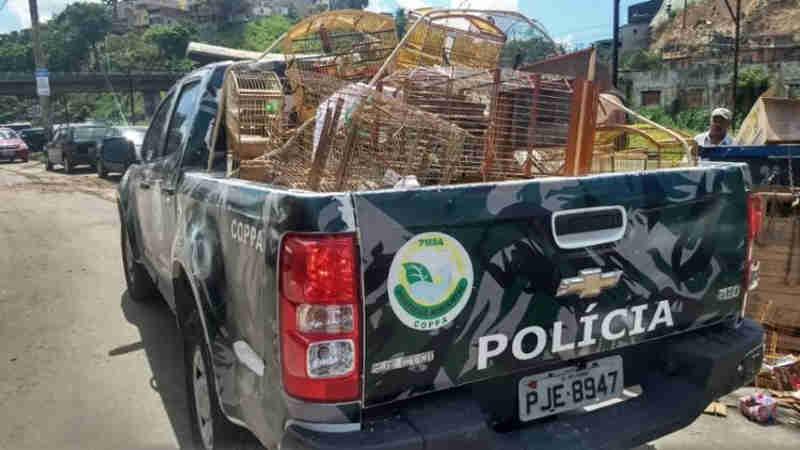 Onze pessoas são detidas por comércio ilegal de animais na Baixa do Fiscal, em Salvador, BA