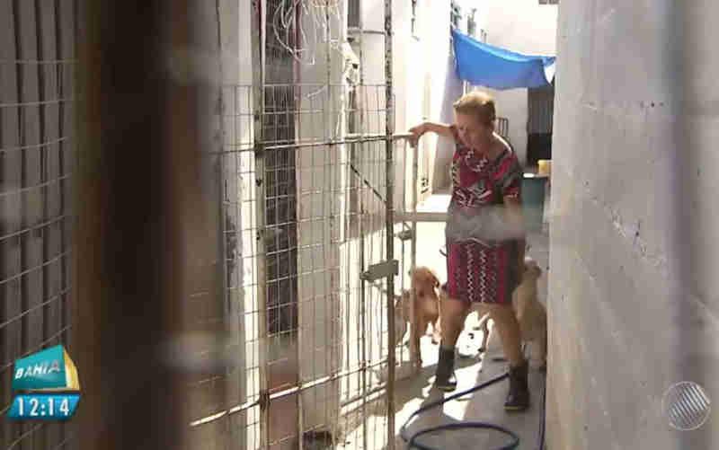 Após recolher 60 cachorros de rua, mulher improvisa canil em casa e busca novo lar para animais na BA; veja como ajudar