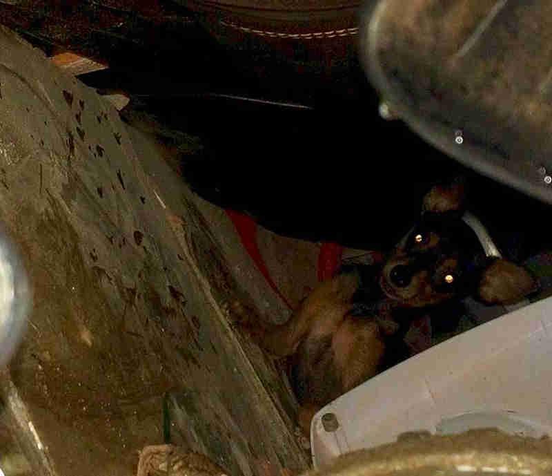 Cão de família vítima de desabamento com 4 mortos na Bahia sobrevive e, assustado, se 'recusa' a deixar escombros