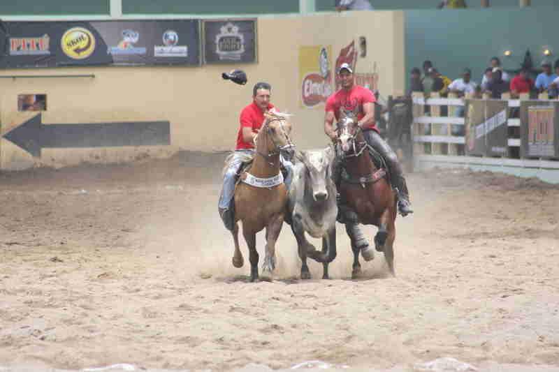 Vaquejada será tratada em ação sobre emenda constitucional, decide Marco Aurélio