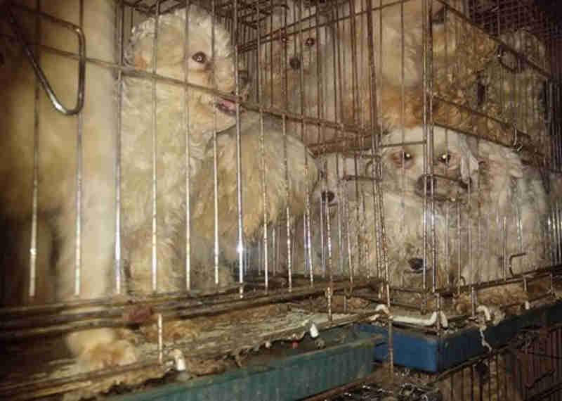 96 cães foram salvos do pior lugar possível