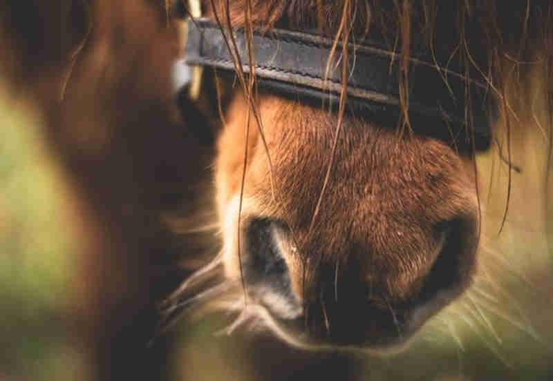 Maus tratos na base de morte do cavalo em Macau