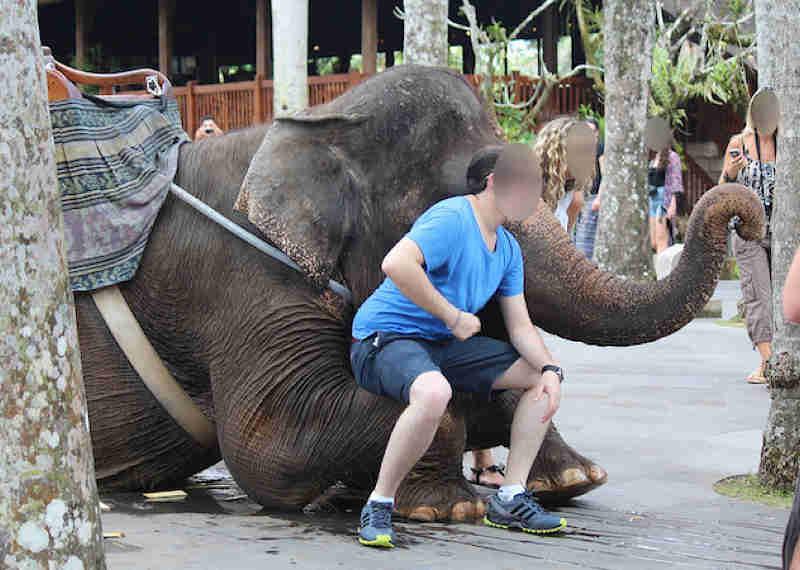 Cinco exemplos chocantes de atrações agressivas de animais que ainda estão disponíveis no TripAdvisor