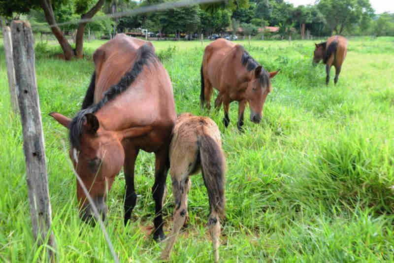 Abandono de equinos e bovinos pode ser denunciado por telefone no Distrito Federal