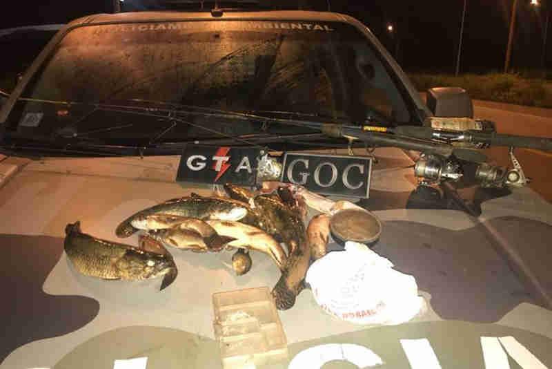 Além do resgate do cachorro-do-mato no Lago Sul, homens do BPMA apreenderam peixes na BR-080.(Foto: PMDF/Divulgação)