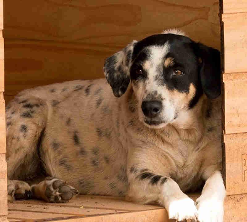 Abrigo do DF que cuida de cães e gatos abandonados sofre sem ração