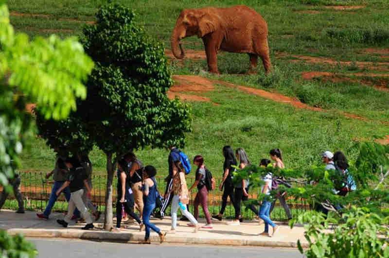 TJDFT nega visitação in loco no Zoológico e mantém audiência em 9 de abril