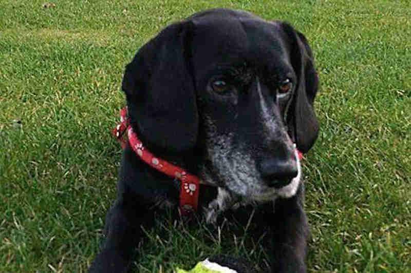 Proibida de ter animais por 20 anos após ter deixado dois cães morrerem de calor