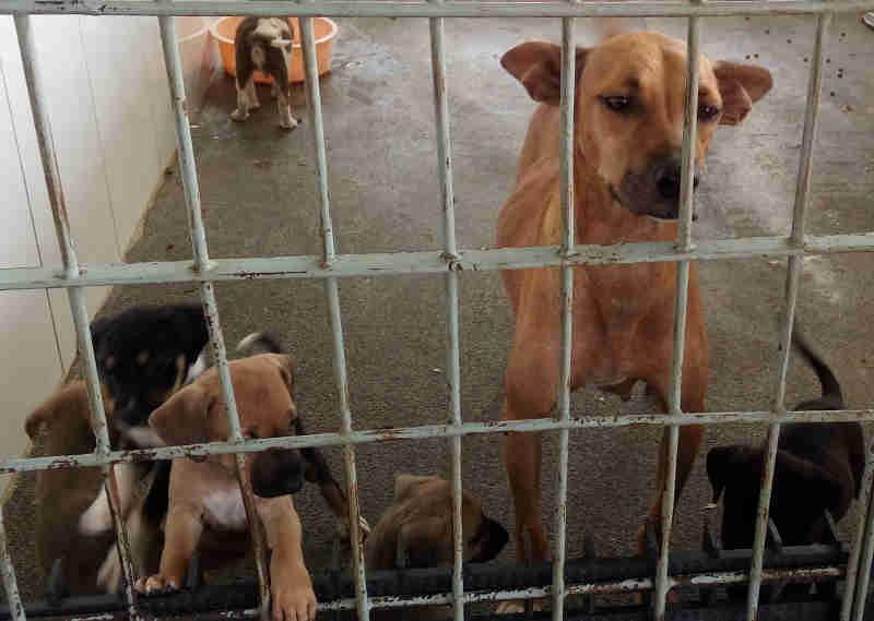 Parceria entre clínicas veterinárias e polícia pode reforçar a proteção aos animais na Serra, ES