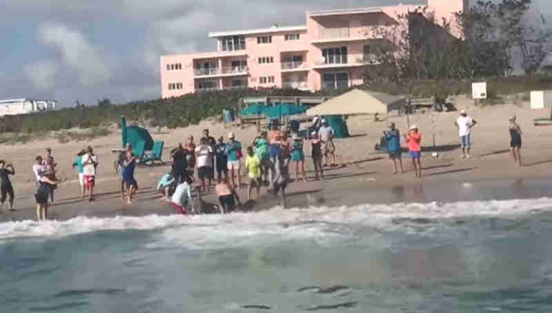 Pescadores arrastam um tubarão-martelo para fora da água apenas para tirar selfies com ele