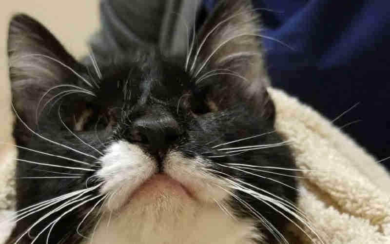 Esta gata pode ter olhos anormalmente pequenos, mas tem um coração enorme e deseja apenas alguém para amar