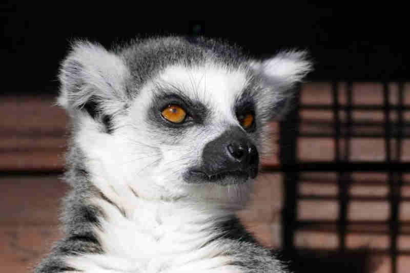 A polícia de Miami está investigando como 36 animais exóticos foram furtados de um santuário por conta de um anúncio falso na internet / Foto: Pixabay/InspiredImages