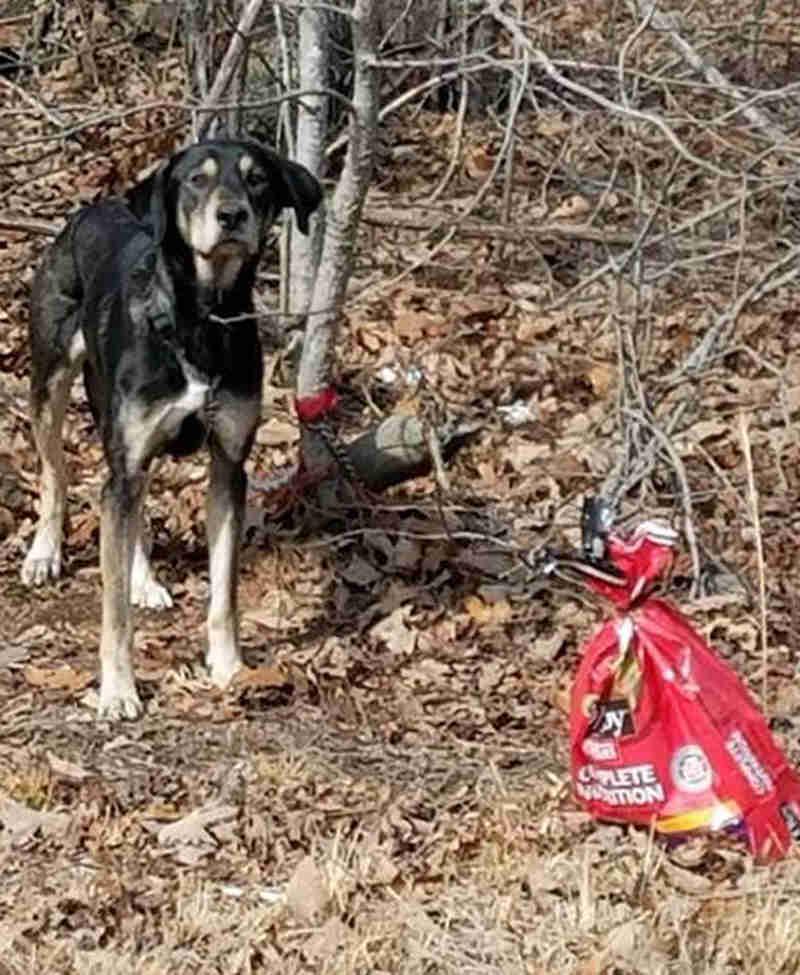 Cão é abandonado amarrado a árvore e com bilhete nos EUA: 'por favor, me arranje uma boa casa'