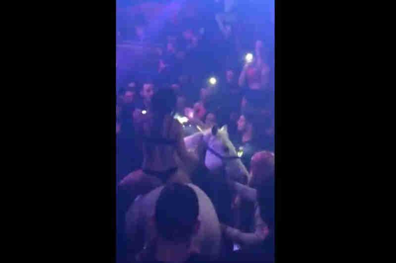 Mulher entra com cavalo numa discoteca em Miami, EUA