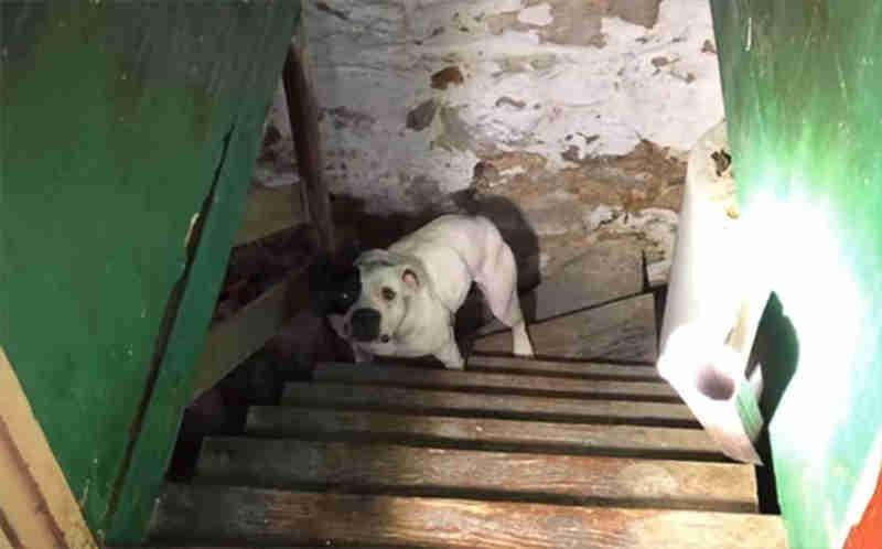 Compra casa e encontra cadela acorrentada na cave