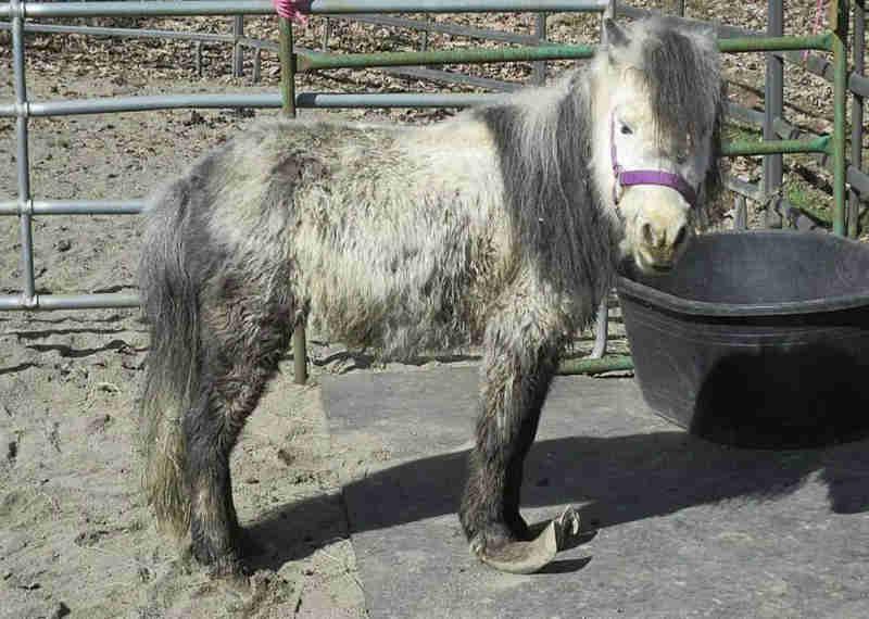 Acusem de crueldade animal proprietários de fazenda que deixaram centenas de animais para morrer de fome!