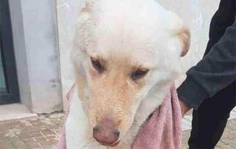 Espanha: Após caso de maus-tratos a cão em Palma de Mallorca o partido 'Esquerra Unida' insiste na criação da secretaria de proteção animal