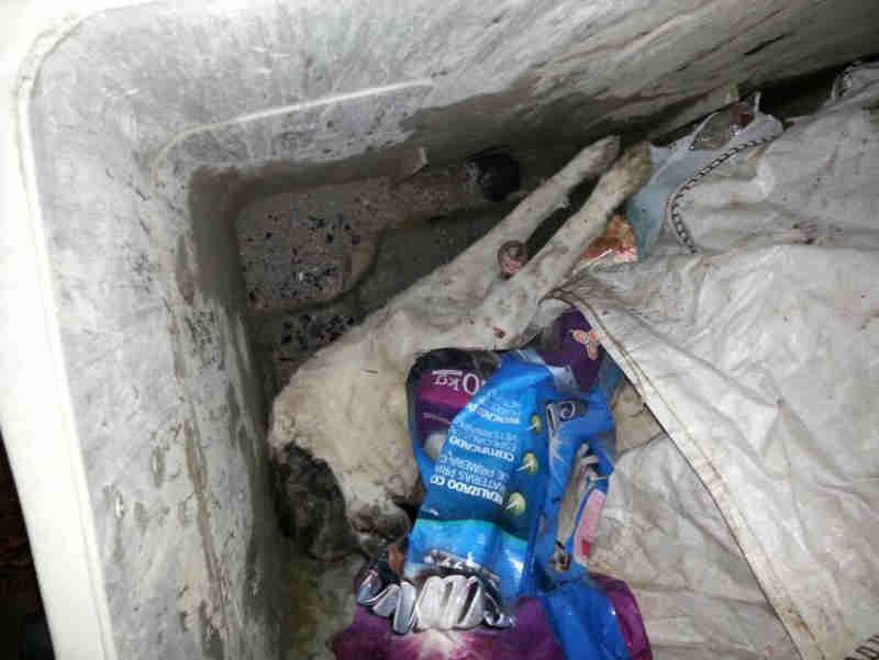 Morre a cachorra que foi golpeada e jogava em um contêiner de lixo na Espanha